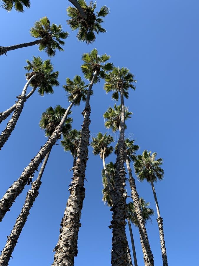 Palmen tegen een blauwe hemel stock afbeelding