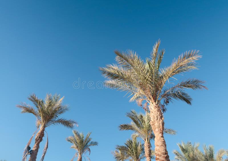 Palmen tegen hemel royalty-vrije stock foto