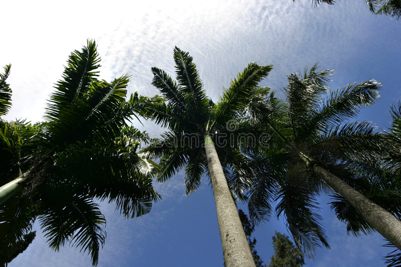 Palmen tegen hemel royalty-vrije stock foto's