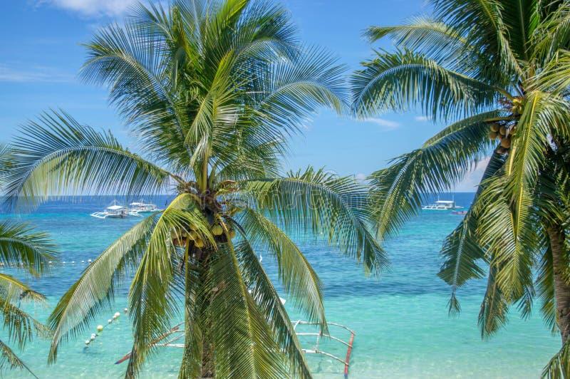 Palmen, turkooise overzees met traditionele boten op de achtergrond, het eiland van Cebu, de Filippijnen royalty-vrije stock afbeeldingen