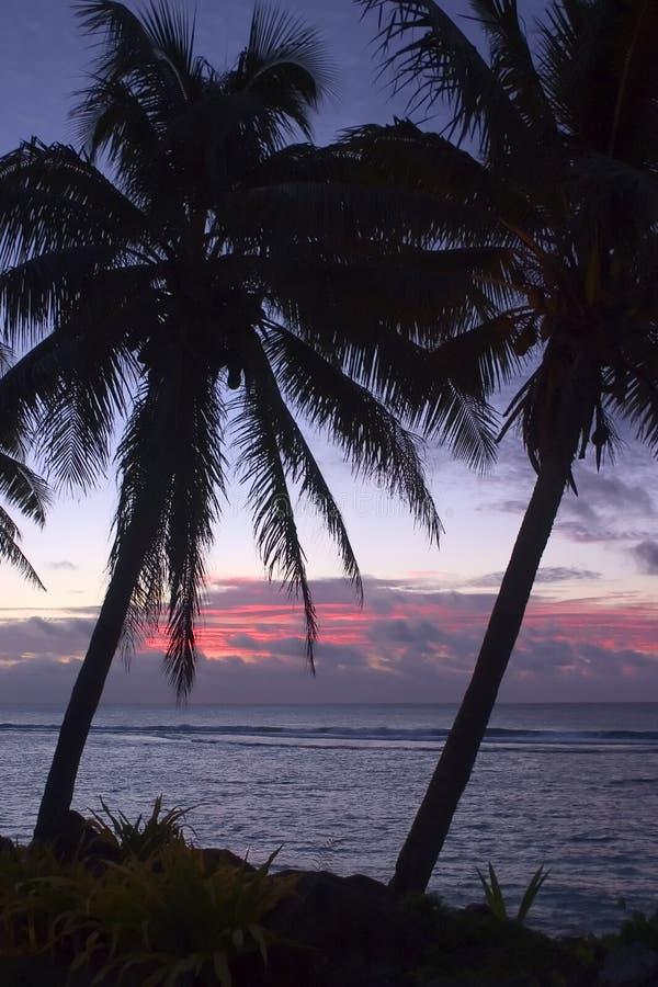 Download Palmen u. Sonnenuntergang stockbild. Bild von palme, baum - 27491