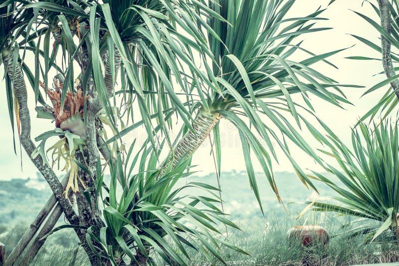 Palmen, uitstekende groene gestemd en gestileerd, kokospalm, retro de zomerboom, stock foto