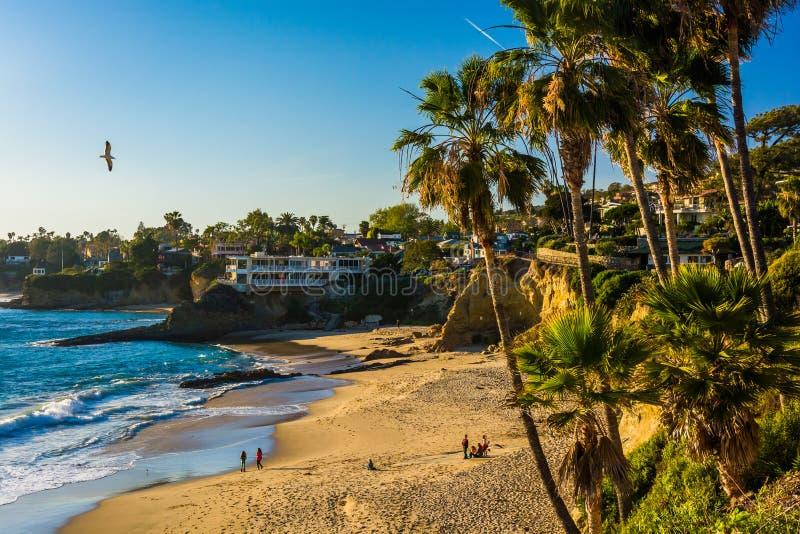 Palmen und Ansicht des Pazifischen Ozeans, an Heisler-Park lizenzfreie stockbilder