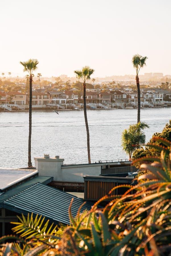 Palmen und Ansicht von Balboa-Insel vom Ausblick-Punkt in Corona del Mar, Newport-Strand, Kalifornien lizenzfreie stockbilder