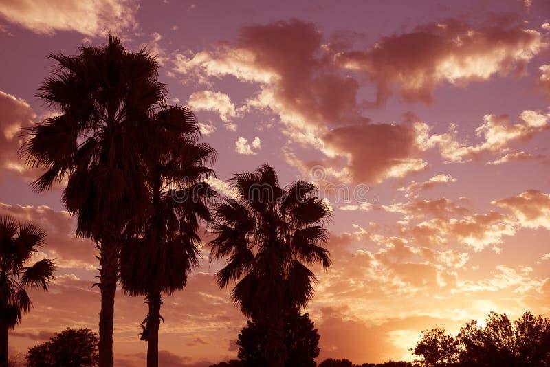 Palmen und bewölkter Himmel USA lizenzfreie stockfotos
