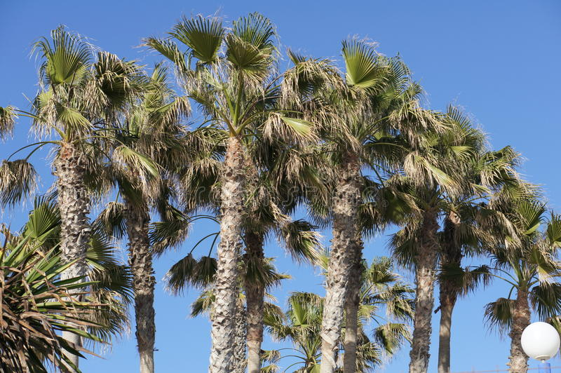 Palmen und blauer Himmel in Torrox-Costa, MÃ-¡ laga Spanien lizenzfreies stockfoto