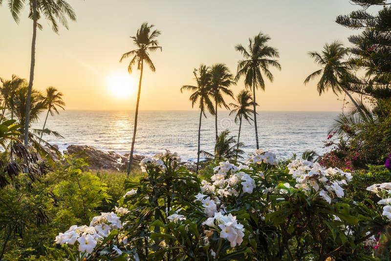 Palmen und Blumen auf dem Ozean an der Dämmerung lizenzfreie stockfotos