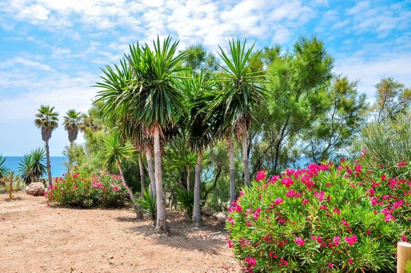 Palmen und Blumen auf Tarragona-Seepromenade, Spanien lizenzfreie stockfotos