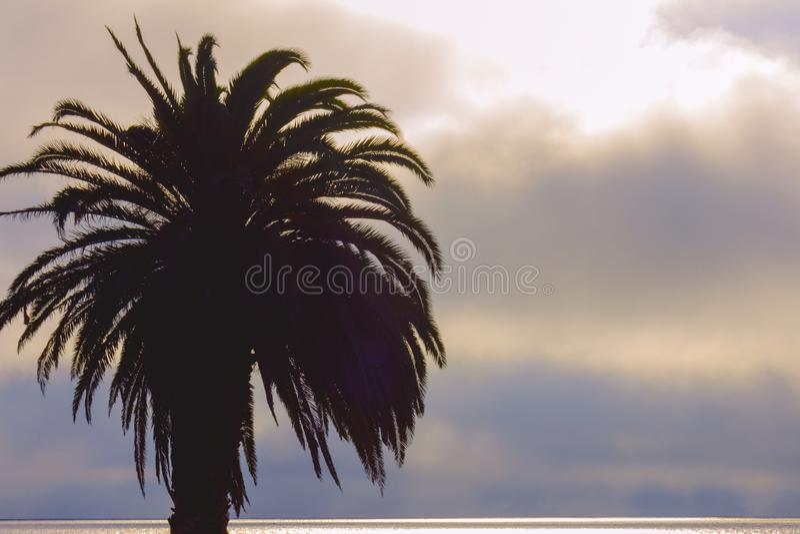 Palmen und bunter Himmel mit schönem sunse stockfotos