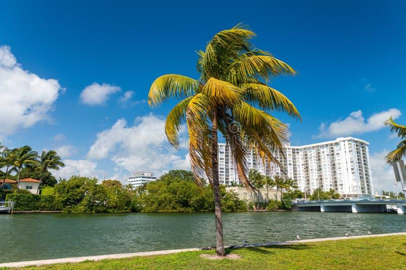 Palmen und Gebäude des Miami Beachs - Florida, USA lizenzfreie stockfotografie