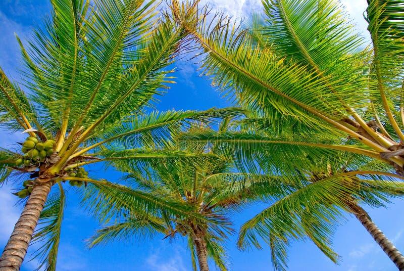 Palmen und Himmel lizenzfreie stockfotografie