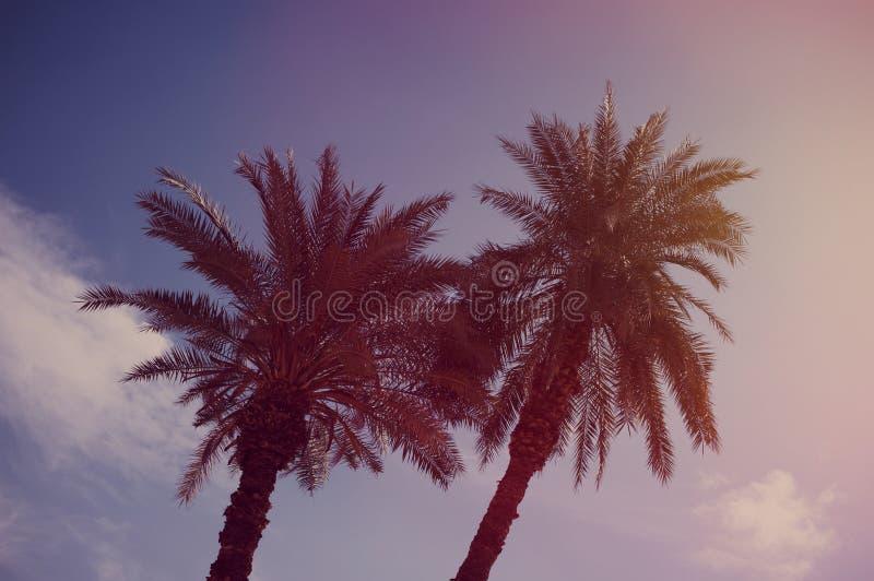 Palmen und Hintergrund des blauen Himmels stockfotos