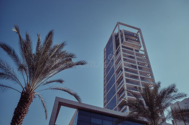 Palmen und moderne Gebäude in Tel Aviv, ISRAEL stockbild
