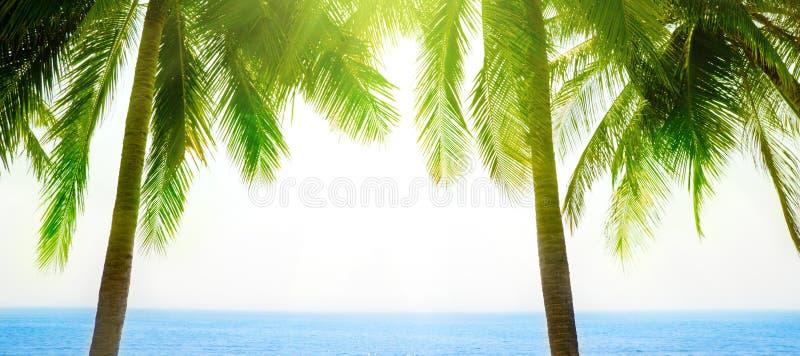 Download Palmen und Morgenmeer stockbild. Bild von blau, nave, tageszeit - 9087293