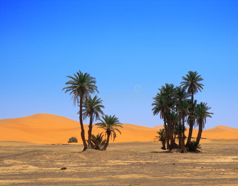 Palmen und wolkenloser Himmel stockfoto