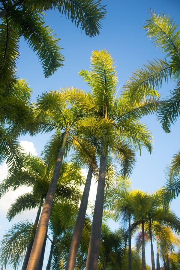 Palmen unter blauem Himmel, Thailand lizenzfreies stockbild
