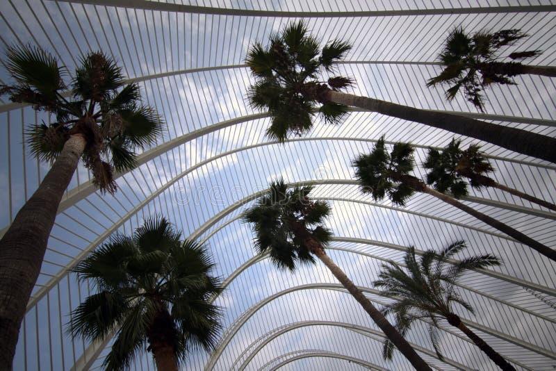 Palmen in Valencia royalty-vrije stock afbeeldingen