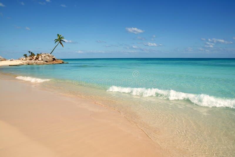 Palmen van het riviera tropische strand van Tulum mayan stock afbeelding