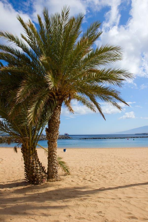 Palmen van het strand van lasTeresitas, Tenerife, Spanje royalty-vrije stock foto's
