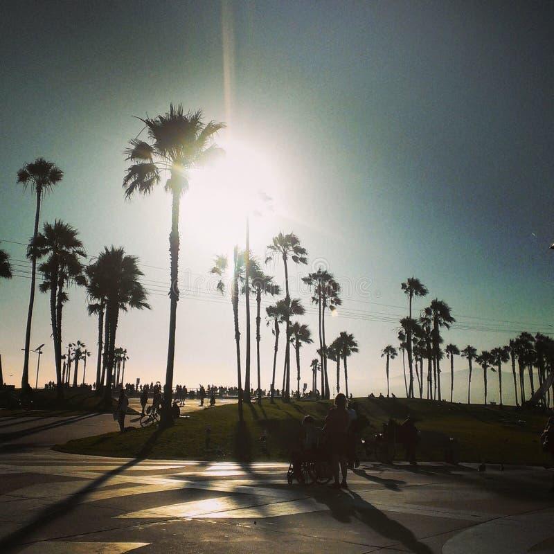 Palmen an Venedig-Strand stockfotografie