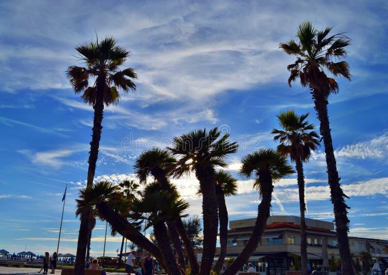 Palmen in Viareggio-Strand stock foto's