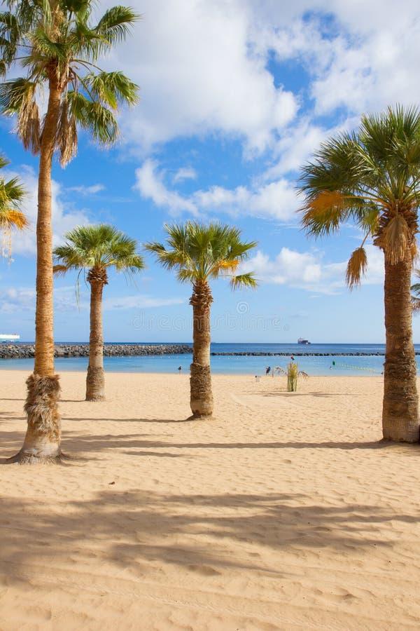 Palmen von las Teresitas setzen, Teneriffa, Spanien auf den Strand stockfotografie