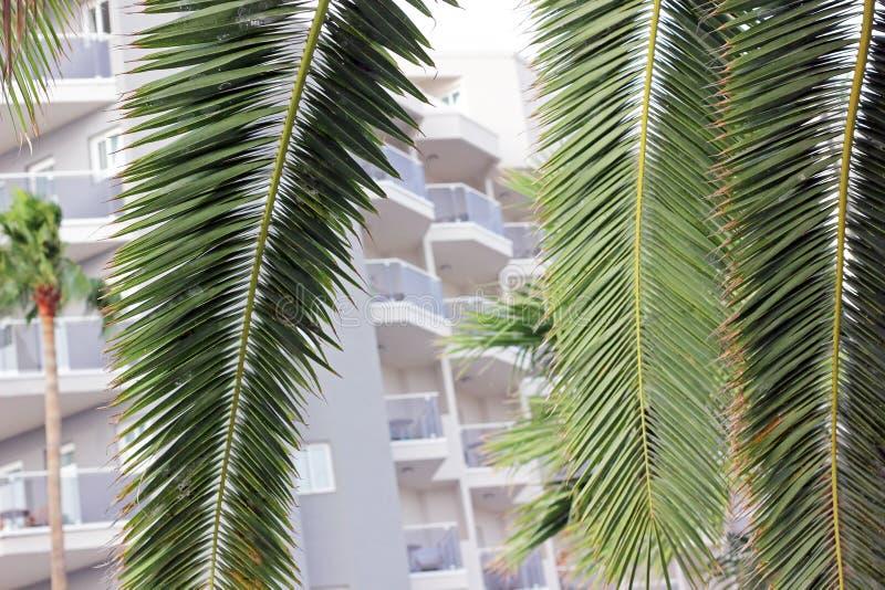 Palmen voor een hotel royalty-vrije stock foto's