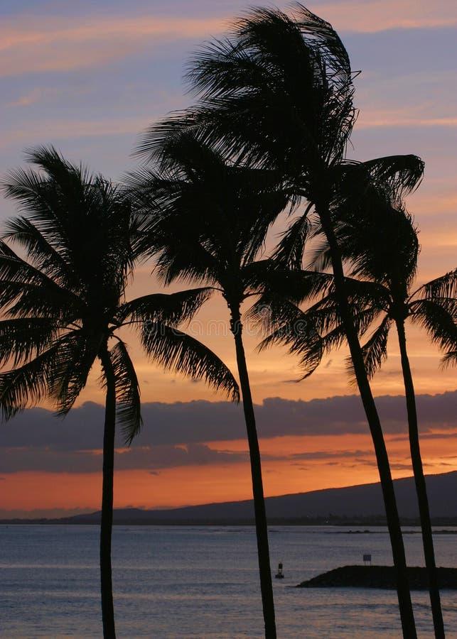 Palmen während eines hawaiischen Sonnenuntergangs lizenzfreie stockbilder