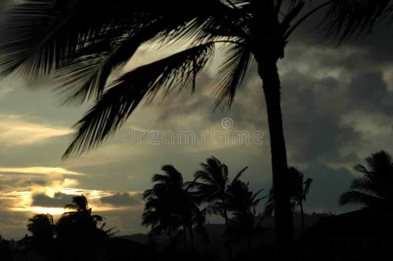 Palmen in Wind stock foto's