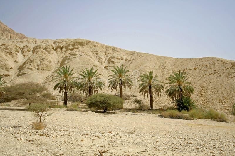 Palmen in woestijnlandschap stock foto's