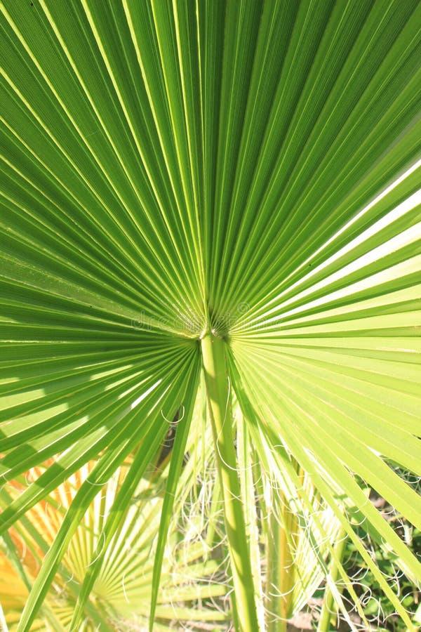 Palmenanlage Thailand stockbild