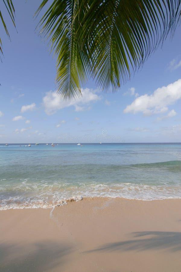 Palmenansicht über Meer lizenzfreies stockbild