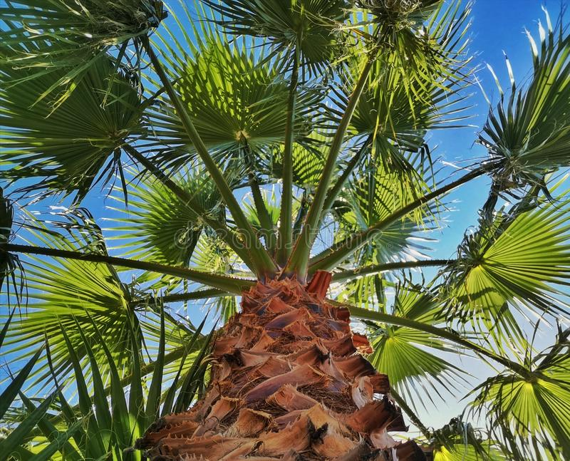 Palmenansicht mit blauem Himmel stockfotos