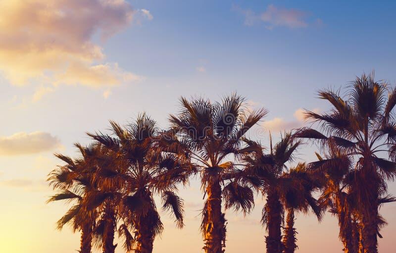 Palmenbaum am Strand gegen bunten Sonnenuntergang mit Wolken Schöner Natur-Hintergrund Sommerurlaub- und Reisekonzept lizenzfreies stockfoto