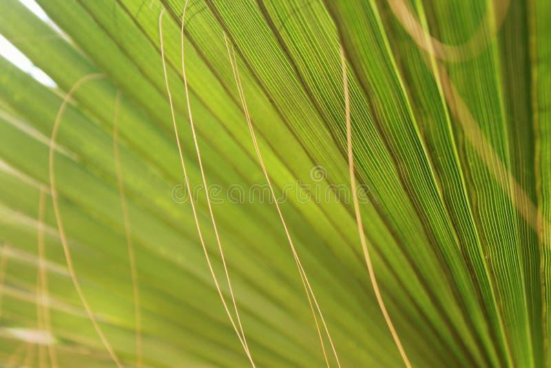 Palmenblatt stock image