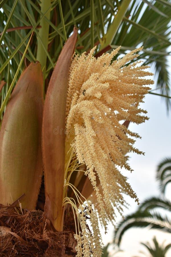 Palmenblume lizenzfreie stockfotografie