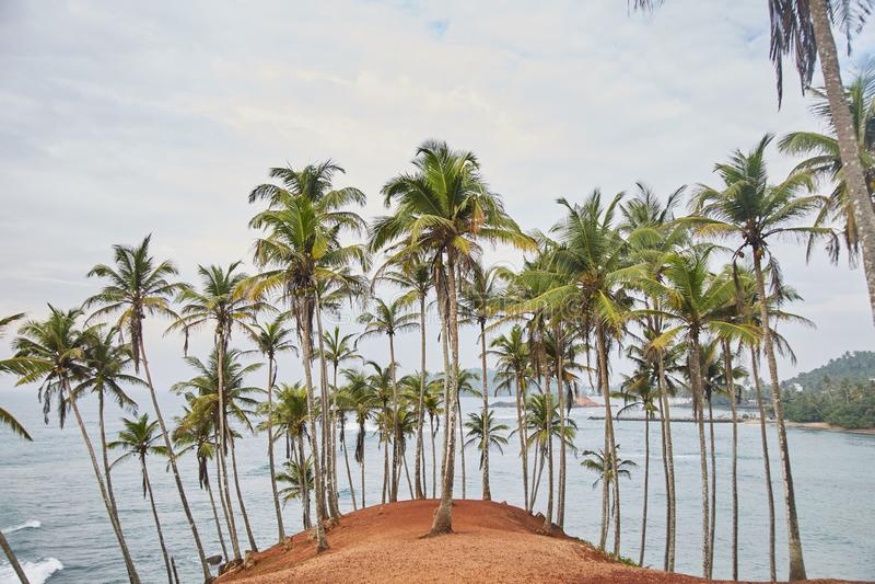 Palmenbomen Geheim Strand Mirissa, Sri Lanka stock foto's
