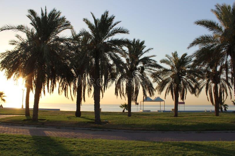 Palmenbomen het park op het strand stock afbeelding