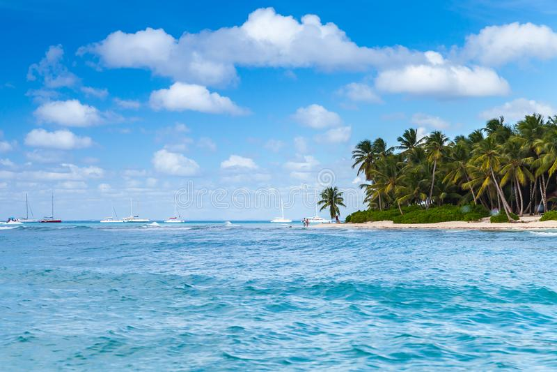 Palmenbomen op zandig strand Caraïbische overzees stock foto's