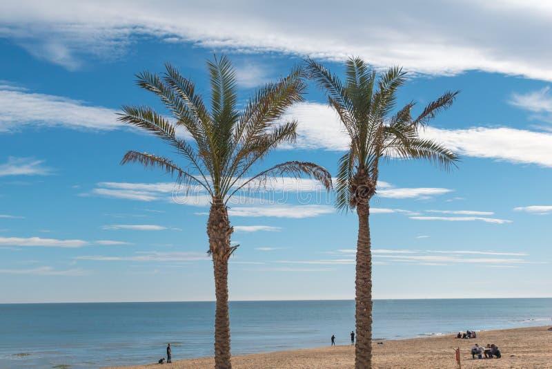 Palmenboom op een blauwe hemel met wolken en de overzeese achtergrond royalty-vrije stock foto