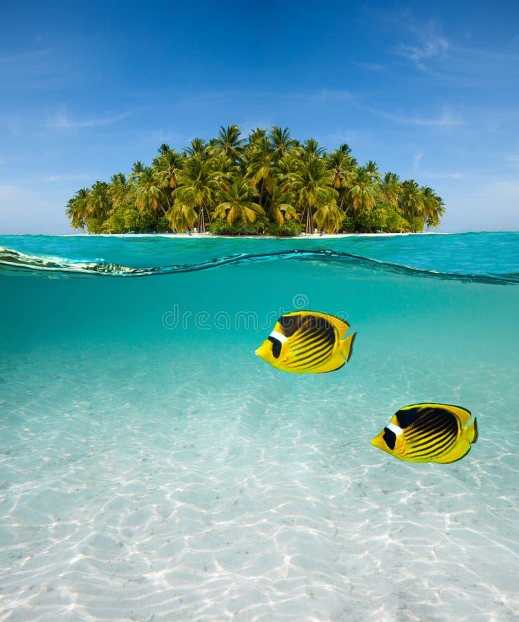 Palmeninsel und Unterwasserwelt stockfotos