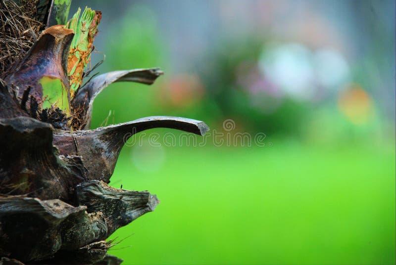 Palmenkabelauszug stockbild