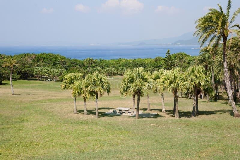 Palmenlandschaft stockbilder