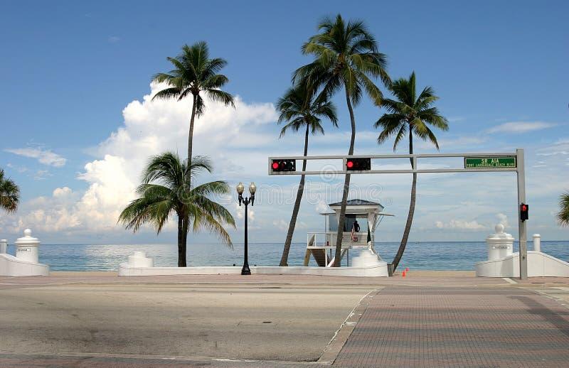 Download Palmenschatten stockfoto. Bild von bäume, wasser, sommer - 32582