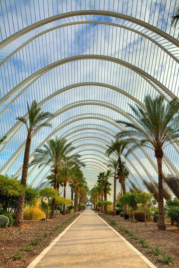 Palmensteeg in Stad van Kunsten en Wetenschappen van Valencia. stock fotografie