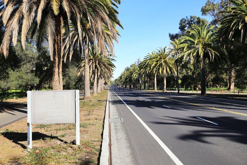 Palmenstraßenansicht in Palo Alto stockfotos