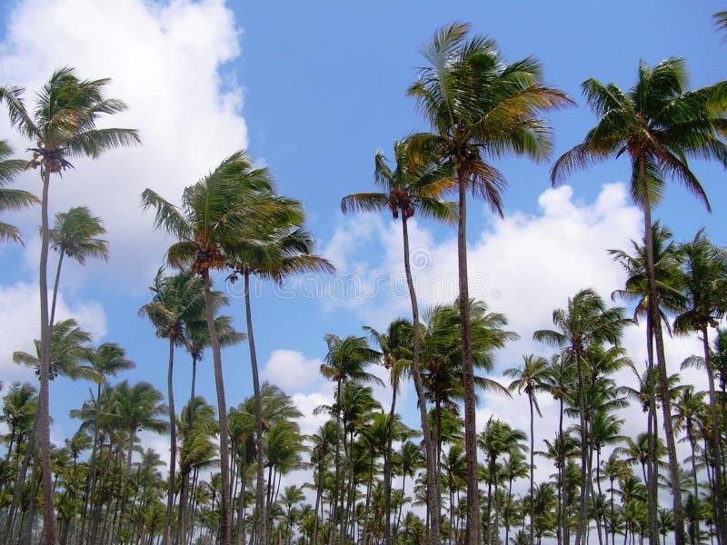 Palmenwaldung lizenzfreies stockbild