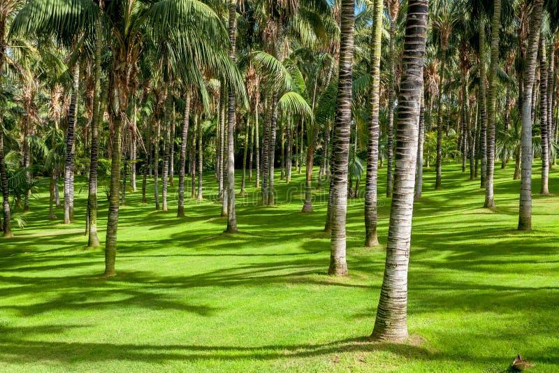 Palmenwaldung stockfoto