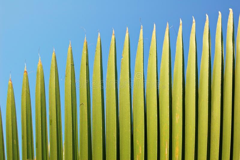 Palmenwedel stockfotos