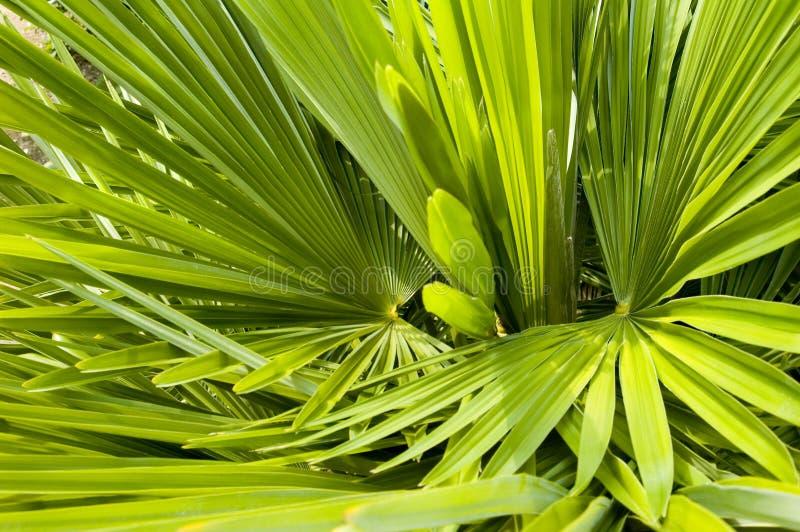 Palmenwedel-Hintergrundbeschaffenheit lizenzfreie stockbilder